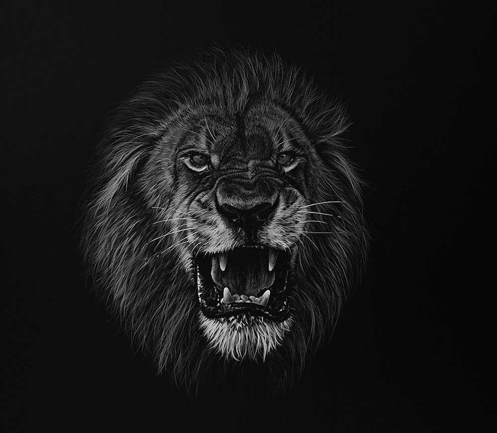 Лев рычащий картинка черно белая